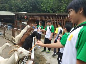 其他學習經歷組--馬房體驗營